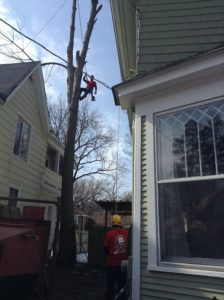 narrow space tree trimming and removal