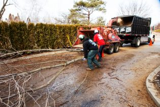 Tree Service Team Work