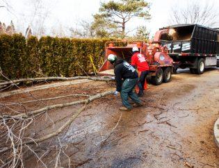 Tree Service Team Work