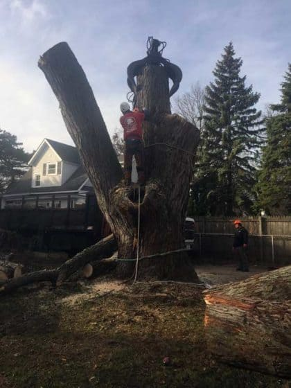 tree cutting & stump removal