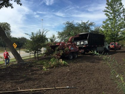 tree removal and mulching