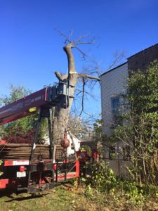 tree removal in Chicago