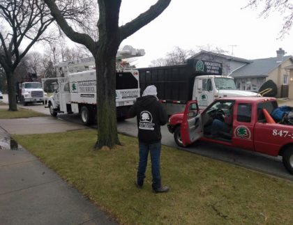 tree removal trucks