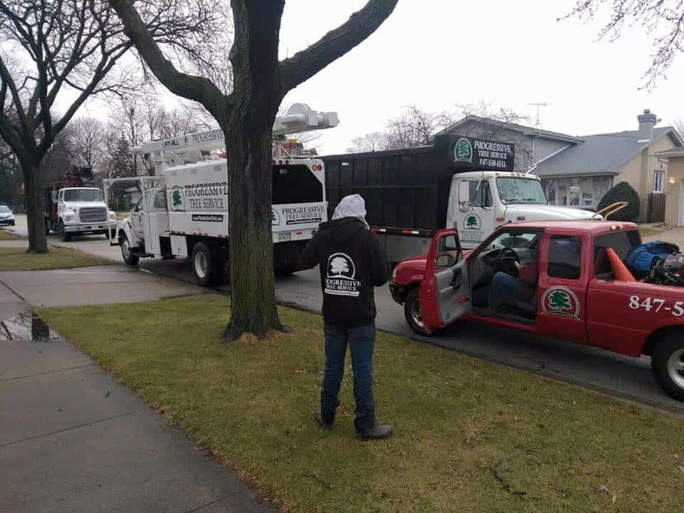 tree removal trucks