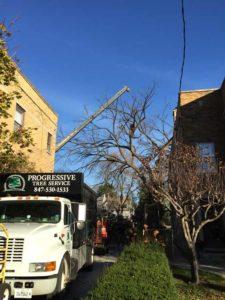 tree-service-truck