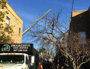 Tree Removal Next To Building