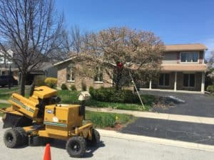 tree shaping Chicago suburbs