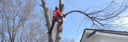 tree trimming climbing