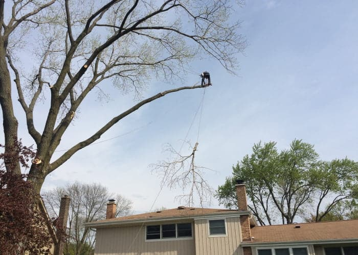 backyard tree trimming