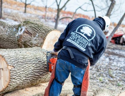 chicago tree removal