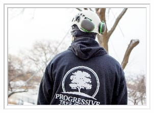progressive tree service worker