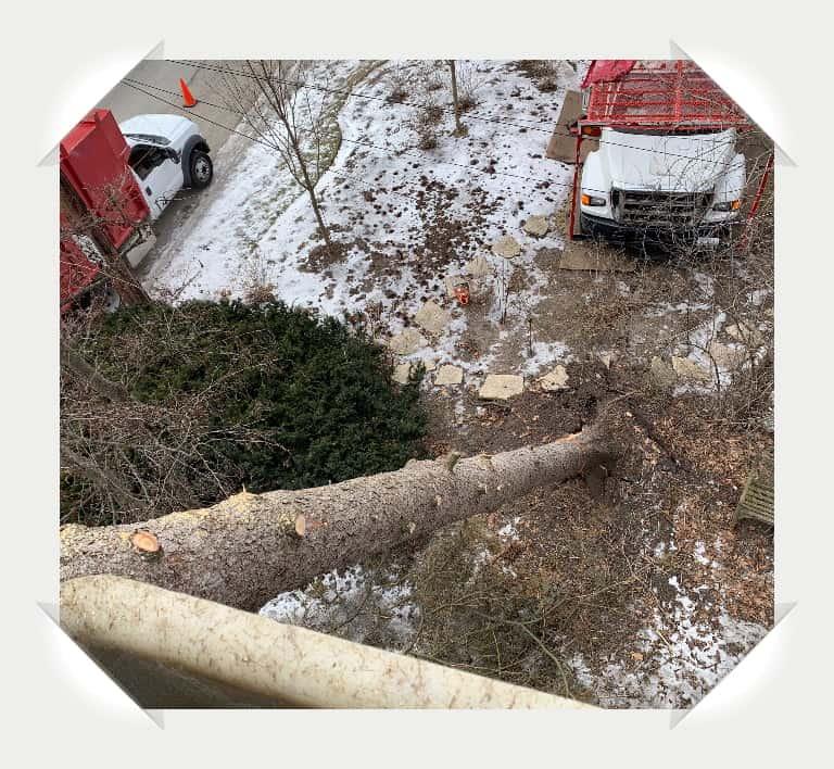 winnetka tree removal