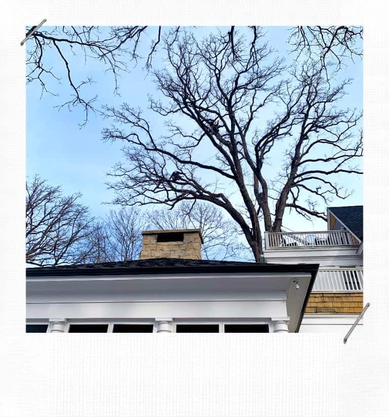 Kenilworth Tree Trimming