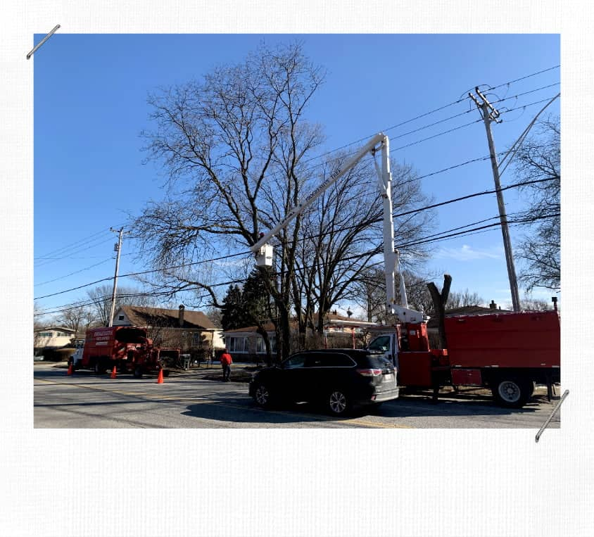 Skokie Tree Service Removal