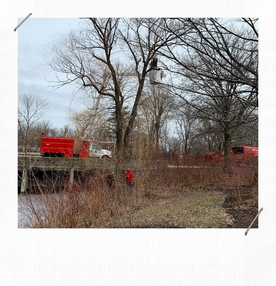 Willow Tree Removal At Botanic Garden