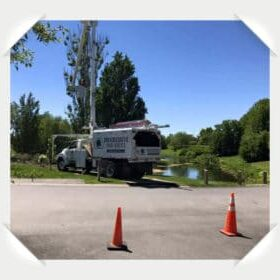 Tree Service Chicago