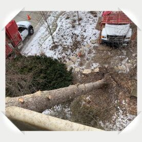 winnetka tree removal